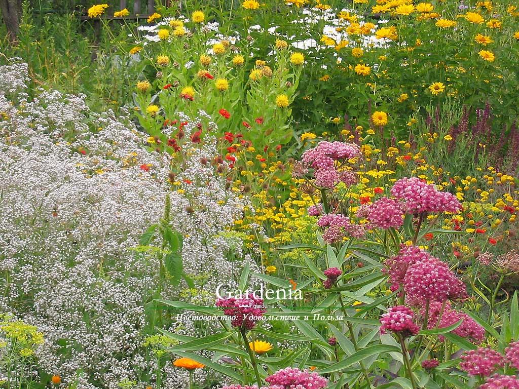 Обои рабочего стола летний сад